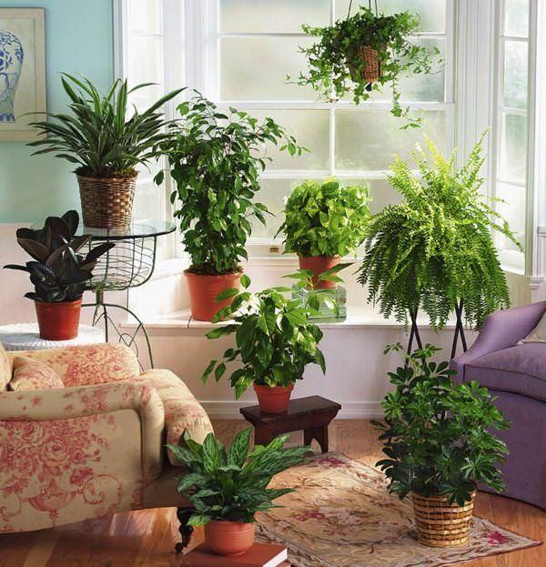 Как увлажнить воздух в комнате без увлажнителя — практические рекомендации