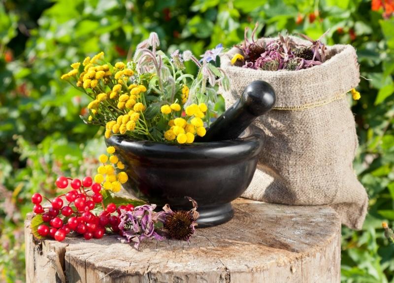 Сбор лекарственных растений: народная фармакология