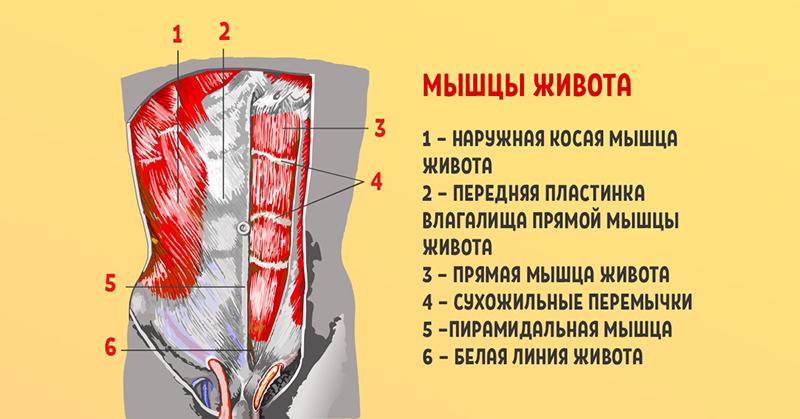 «Стабилизация поясничного отдела позвоночника — вот что вам крайне необходимо! И здоровая спина станет…»
