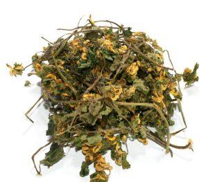 Травянистое растение зеленчук желтый